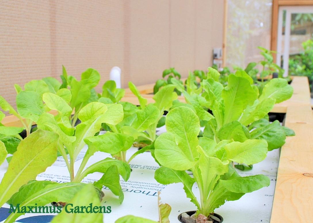 2015-05-maximus-gardens-11